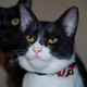 今日の黒猫モモ&白黒猫ナナの動画ー737