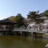 【Nara travel】Mar 31, 2018 Ukimido (浮見堂) and Cherry blossoms at Nara park (奈良公園の桜).