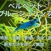 ベルベットブルーシュリンプ繁殖や飼育方法!青いエビを飼育しよう!