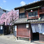 【Nikon Z 50・仙台・河原町駅】 仙台駄菓子の石橋屋の桜(本篇) April 2021