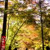 今熊野観音寺の紅葉@2018