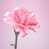 雑談・Flowerという歌手グループと花言葉♪