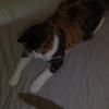 【愛猫日記】毎日アンヌさん#297