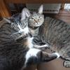 猫に「めんこい」って普通に言ってたら、それ北海道弁だよと言われた話