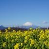 駅からハイキングで「吾妻山公園」の『早咲き菜の花』を満喫してきました(スタンプラリーもコンプリート(^^))