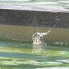 6月下旬:世田谷区・駒沢オリンピック公園周辺をお写んぽ。其の弐/続:カルガモ一家観察編