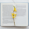 パート主婦が9月に読んだ本10冊と印象的だったベスト3