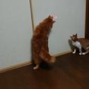 我が家の猫たちとの生活