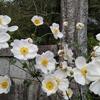 「時間」のお話⑯~ 三世の仏の心、現世の庭に「善根の種」を ~ 「法の水茎」100