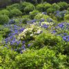 紫陽花と御朱印 もうすぐ6月、せっかくだから花も楽しめる計画を!
