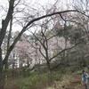 勝俣部長の「高尾登山と健康体質作り」556・・・・老年よ テレビを 捨てろ
