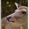 写真 奈良の鹿