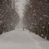 雪の昭和公園散歩…