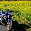 指宿菜の花バイクツーリング