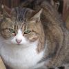 猫集会に集まる猫さんをご紹介します。その1