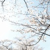 kirsikan kukat #3