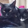 今日の黒猫モモ&白黒猫ナナの動画ー866