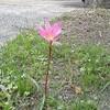 一輪の花、ダンゴムシ、はがきのことなど