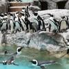 ペンギンまみれの長崎ペンギン水族館😍🐧