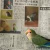 イベント終わって、大阪は梅雨入り。そして朝刊に載っちゃった(^^)