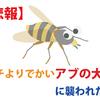 【悲報】ハチよりでかいアブの大群に襲われた話