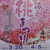 日本一の花桃の里の「古河桃まつり」は、中止だけれど、桃はコロナに負けないで満開でした!