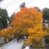勝俣部長の健康体質作り・・・・高尾山「健康を体感する」(43)
