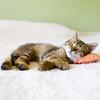 Habit - 猫達の不思議な習性