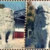 一日一撮 vol.141 サイクリング→亀山神社へ