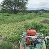 連休最後の日は畑の草刈り!