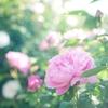 英語で名言を:あなたのすきな花おしえて  わたしもすきになりたいから(矢野顕子)