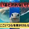いると釣れない!?イルカやエイなど釣りに影響する生き物たち