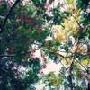 樹木の彩り