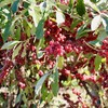 「佐久の季節便り」、「立冬」、急がれる草木の冬支度…。