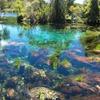 世界で3番目に美しい泉・Pupu Springs(ププ・スプリングス)が、汚染の危機にさらされている!?