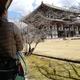 【ペットとお出かけ】奈良県奈良市:東大寺をペットと散策 | 大仏殿はワンコ連れでも入ることが可能です!