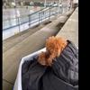 2020.11.23 【フィギュアスケートを観る!】 スイスで練習を毎日見に行く愛犬  Uno1ワン チャンネル宇野樹より