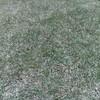 2018/05/12の芝生