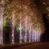 カップルにお勧め!「ローム イルミネーション」は86万球の光の並木道 開催期間や見どころは?