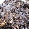 土もろく哀れ倒れし霜柱