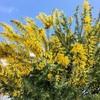 春の黄色の存在