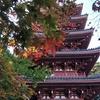 11月の草花の歳時記:竹林寺の紅葉@高知市五台山