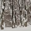 雪のブナ林にて