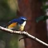幸せの青い鳥 (*n´ω`n*)