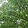 さわやかな初夏の風    美容室帰りの樹木と花