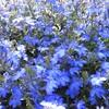 初夏の花4