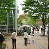 新緑に囲まれて今日から3日間植物園で出張販売