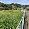地蔵池(兵庫県淡路)