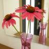 エキナセアをガラス花瓶に♪玄関に甘い香りが漂います (^^)