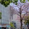 台南   道にきれいな花が咲いています